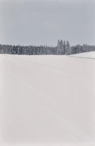 1 - Grasses In Ice Fog