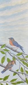 Summer Eastern Bluebirds